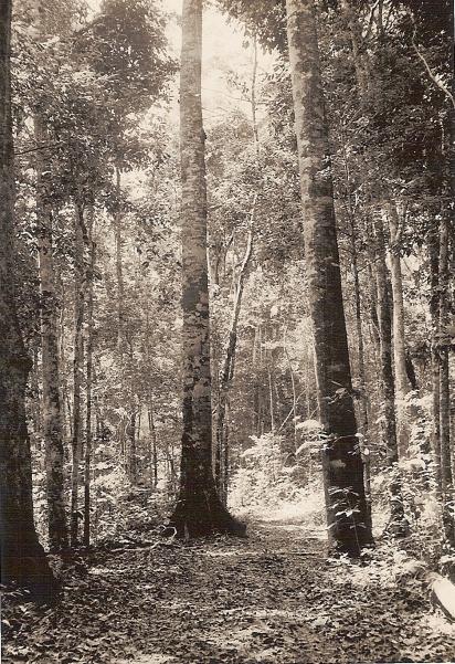 No dia 27 de março de 1896, entrou na floresta para não mais retornar (Acervo: Fundação Cultural de Paranavaí)
