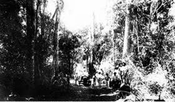 Estrada percorrida por centenas de colonos que migraram para Paranavaí em 1927, após reconstruírem uma ponte que desabou em um dia chuvoso (Acervo: Diederichsen & Tibiriçá)